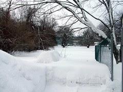 Backyard_2311c