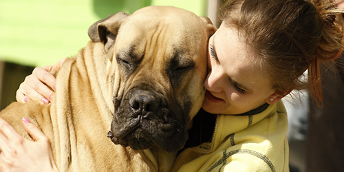 Cuidados de perros grandes