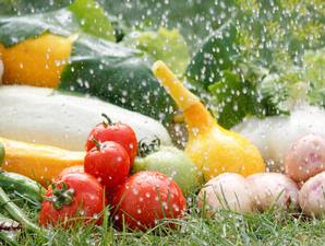 Tanaman Sayuran yang Dapat Ditanam di Kebun Rumah