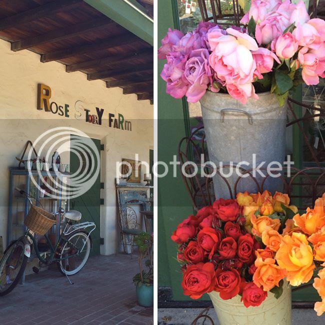 Rose Story Farm-3