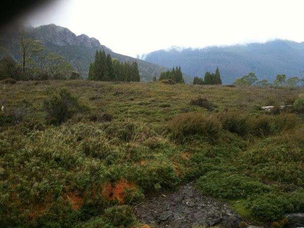Hiking through wilderness