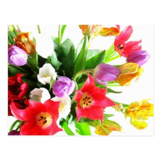 Romantic Tulip Flowers Postcards