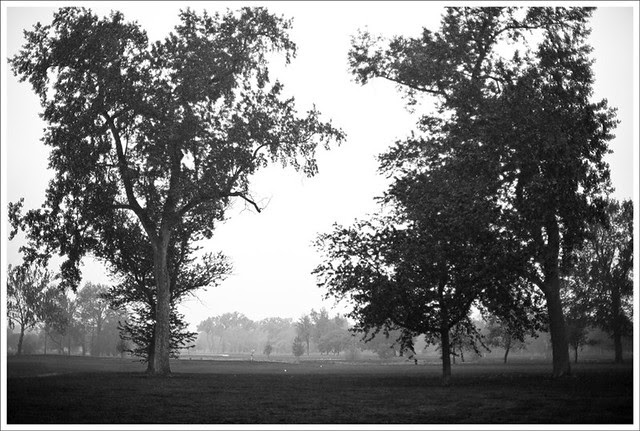 Forest Park Spring Rain 1