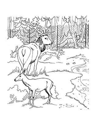 ausmalbilder tiere hirsch - kostenlose malvorlagen ideen
