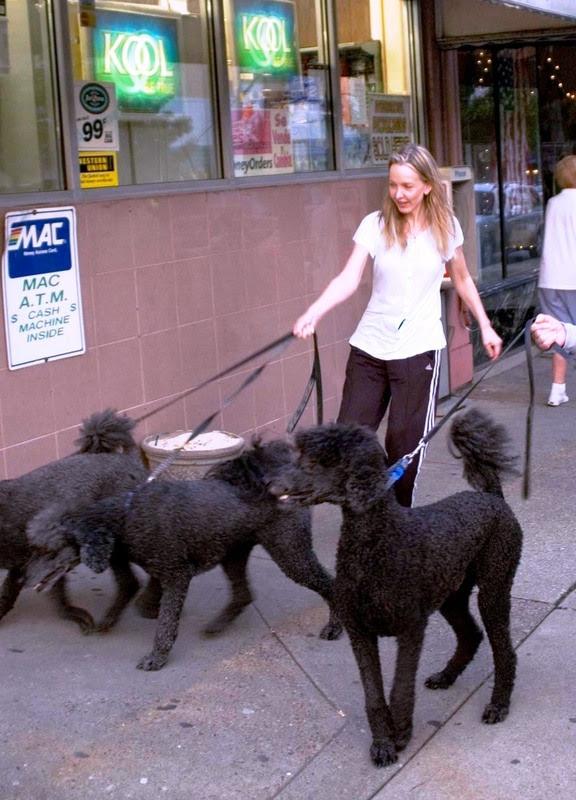 Blog wars Jane Hamsher with her Poodles