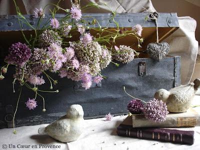 Bunch of wild garlic flowers