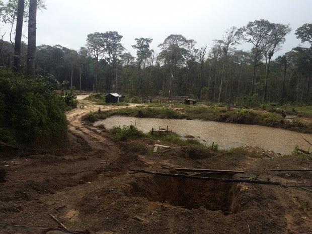 Apreensão ocorreu em área de mata fechada em Tartarugalzinho, no AP (Foto: Dicom/Batalhão Ambiental)