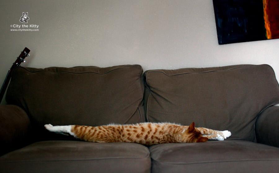 City, The Very Long Kitty