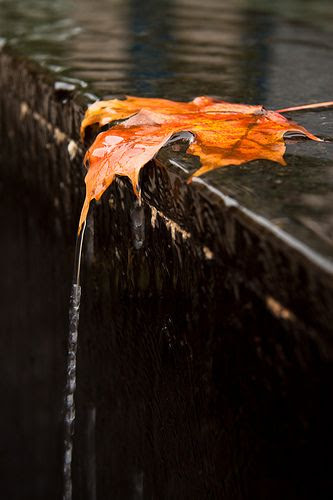 Fall's last leaf