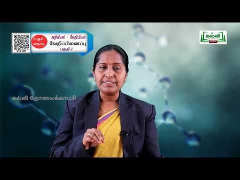 9th Science  வேதியியல் வேதிப்பிணைப்பு  அலகு 13 பகுதி 1 Kalvi TV