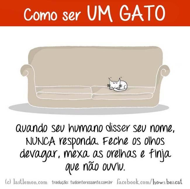 como-gato-7