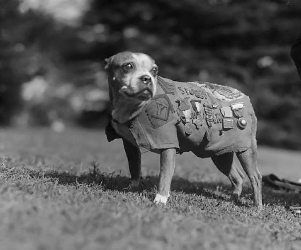 Os animais também lutaram na Primeira Guerra Mundial 01