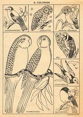 oiseauxcolor