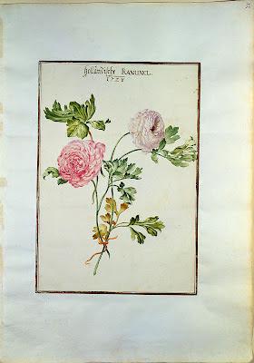 1730 Karlsruher Tulpenbuch