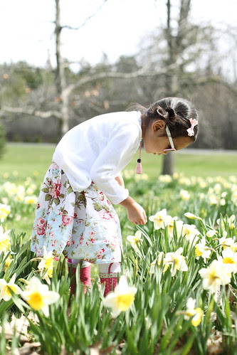 daffodils @ rockcliffe park