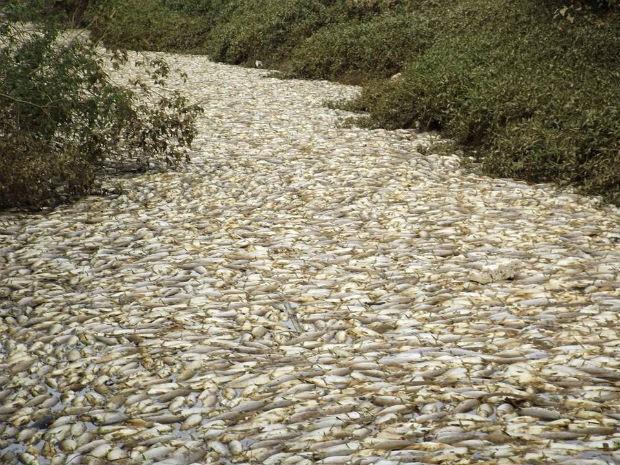 Morte de peixes em Salto (Foto: Arquivo Pessoal/Paulo Conti)