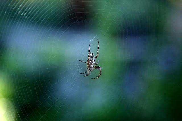 spider, portland memory garden