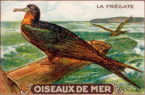 oiseaux de mer 3