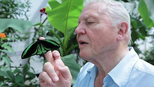 Attenborough se ha hartado de los creacionistas