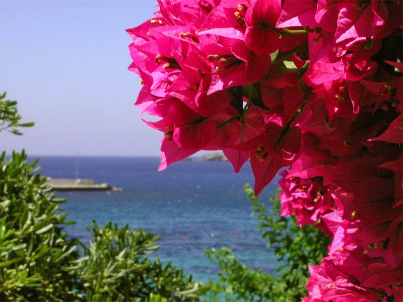 http://www.ilonabastos.webhs.pt/capsali_4.jpg