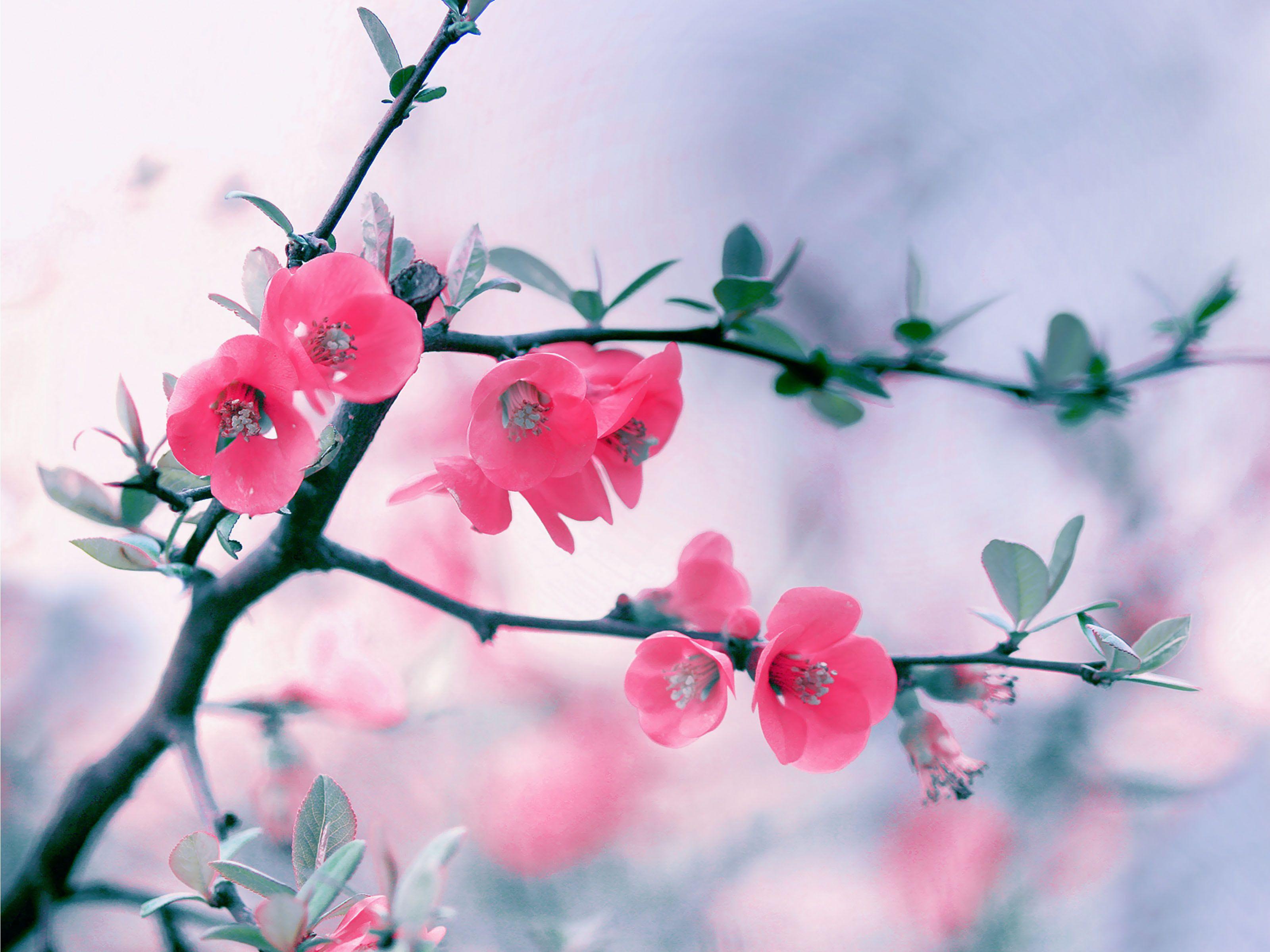 http://ustazfathulbari.files.wordpress.com/2014/05/spring-blooming-flower.jpg