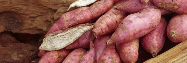 Excelente para a alimentação, a batata doce deve estar inserida numa dieta variada (Foto: Think Stock)