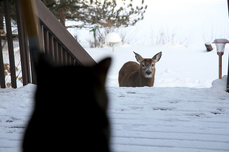 deer watched by skitty