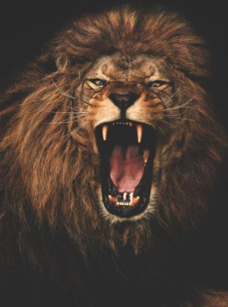 レオザライオンleo The Lion ママニャン絵日記