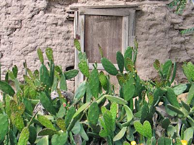 Vandalized Cacti