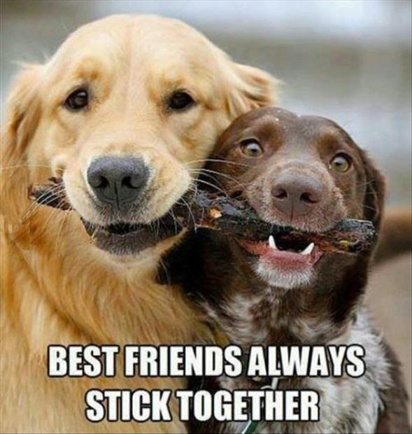 Best Friends Always Stick Together Picture Quotes