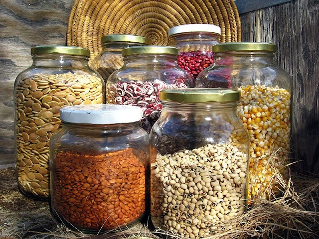 Advantage Of Storing Seeds In Seed Banks / Advantage Of Storing Seeds In Seed Banks : A survival seed ...