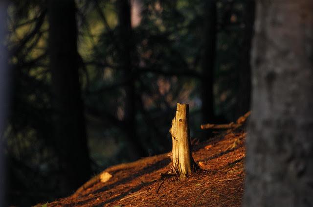 iluminated stump