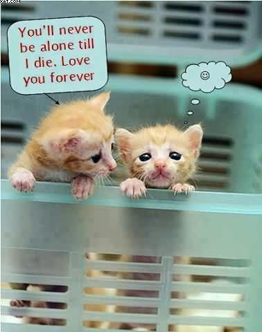 Youll Never Be Alone Till I Die Love You Forever Quotespicturescom