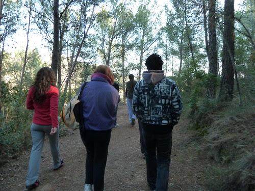 caminant pel bosc verd