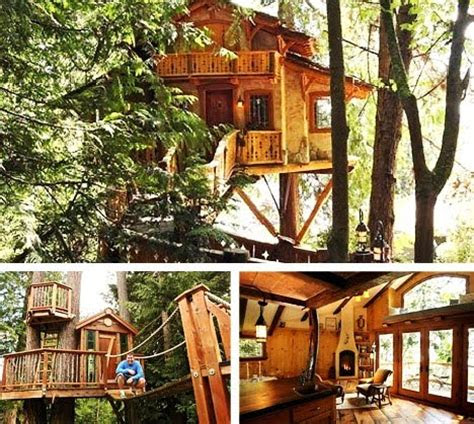 journey   featherless real life treehouses