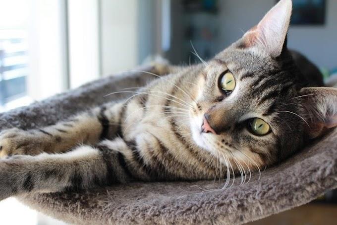 ¿Cuáles son las ventajas e inconvenientes de tener un gato en un piso?