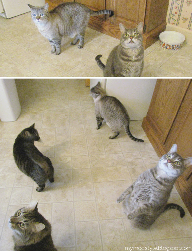 Cats begging for food1