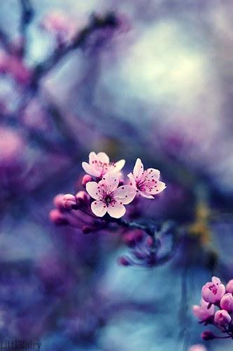 Feliz Quinta Flower! by Menina Prendada - Manualidades da Dayse
