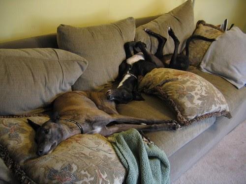 Dog Beds    Curse