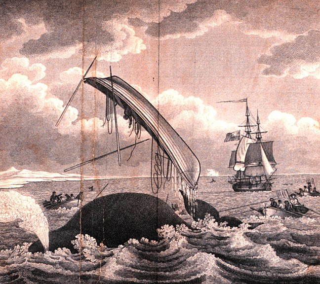 File:Whaling-dangers of the whale fishery.jpeg