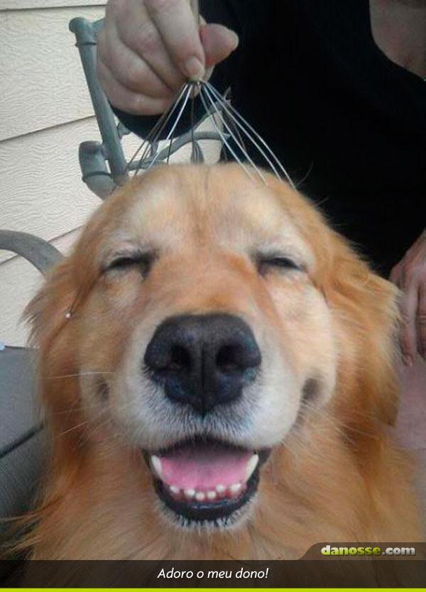 Arrepiando o cachorro
