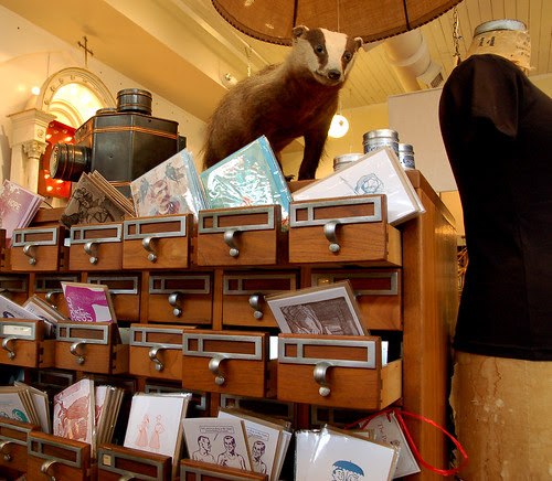 Badger Taxidermy and Card Catalogue