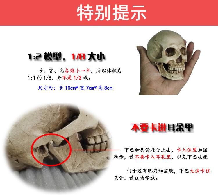 Insan Kas Iskelet Kafa Ile 1 2 Sanat Oyma Kafatası Boyama Referans