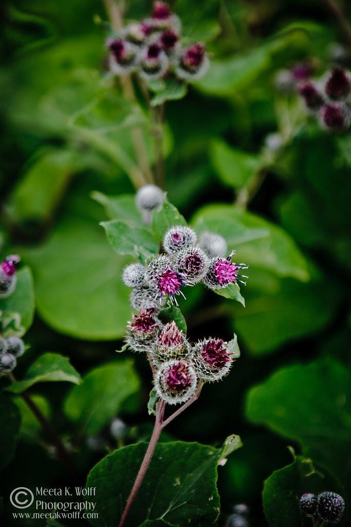 Beauty in Weeds by Meeta K. Wolff