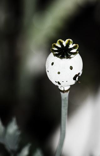 Poppy Polly 166/365