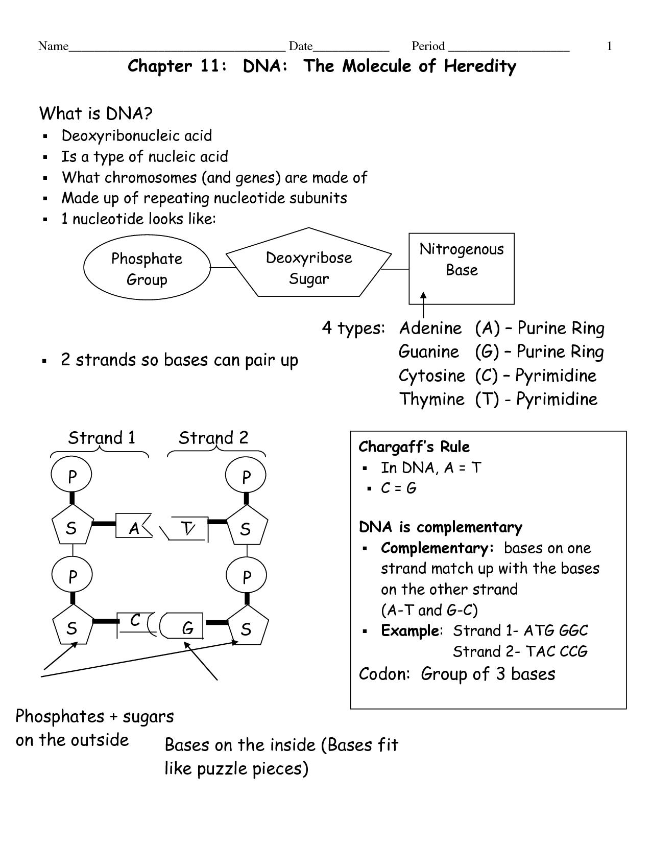 15 Best Images of DNA Model Building Worksheet  DNA Paper Model Activity, DNA Structure