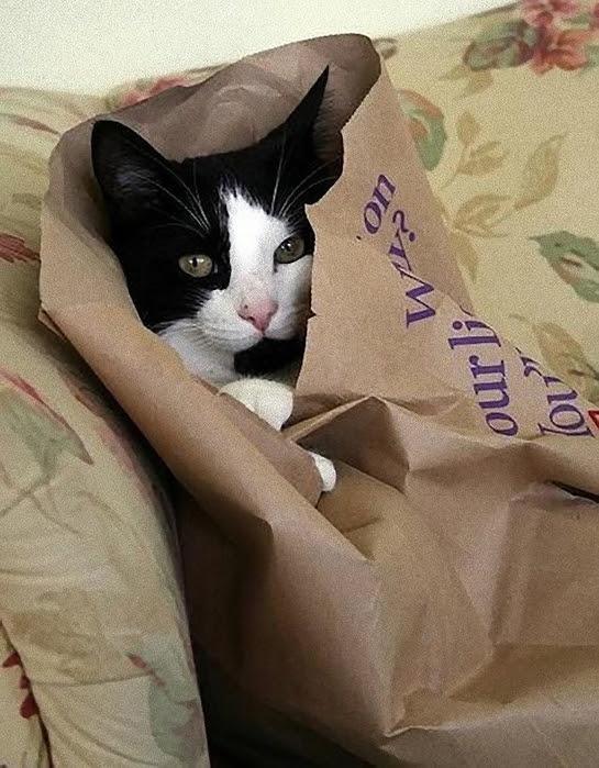 hidingcats19 (545x700, 277Kb)