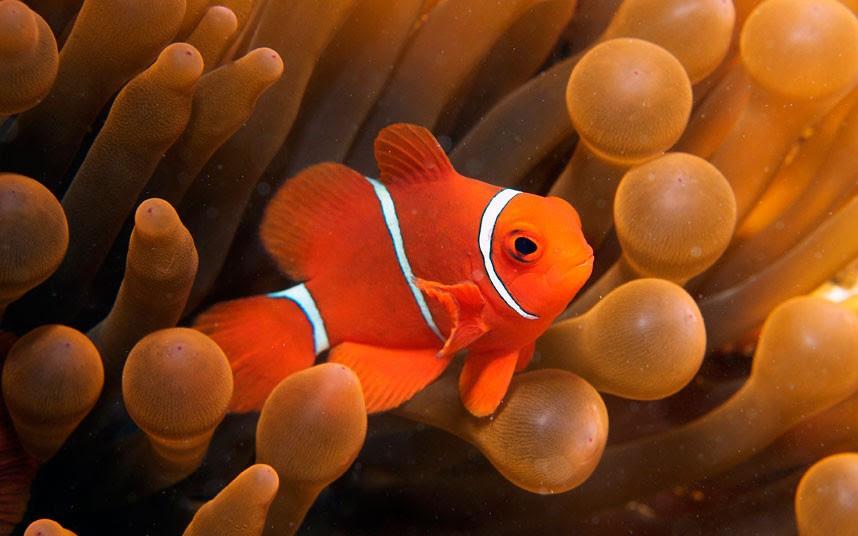 Parakseno.gr : coral 4 Ο μαγικός κόσμος του μεγάλου κοραλλιογενούς υφάλου
