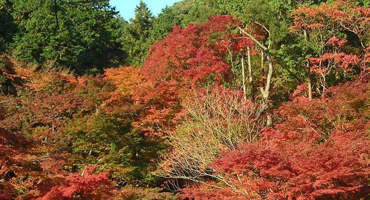 Decoración de otoño Feng Shui | DecoracionDe-INTERIORES.com