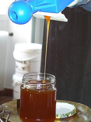 extraction du miel de bruyère blanche.jpg